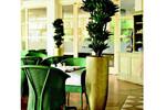 Pflanzen prägen das Raumambiente