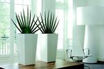 Pflanzen für jede Stilrichtung und für jeden Zweck